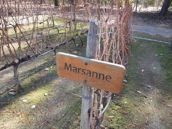 IMG_7238マルザンヌ.jpg